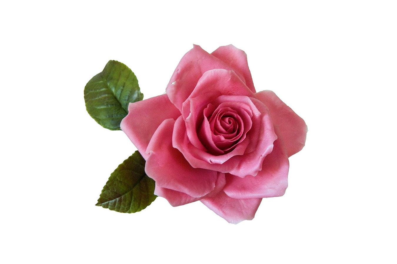 rosa rosa realizzata in porcellana fredda